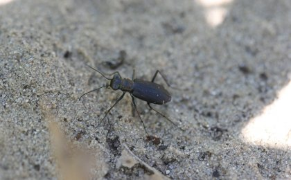 Unidentified (Insects)