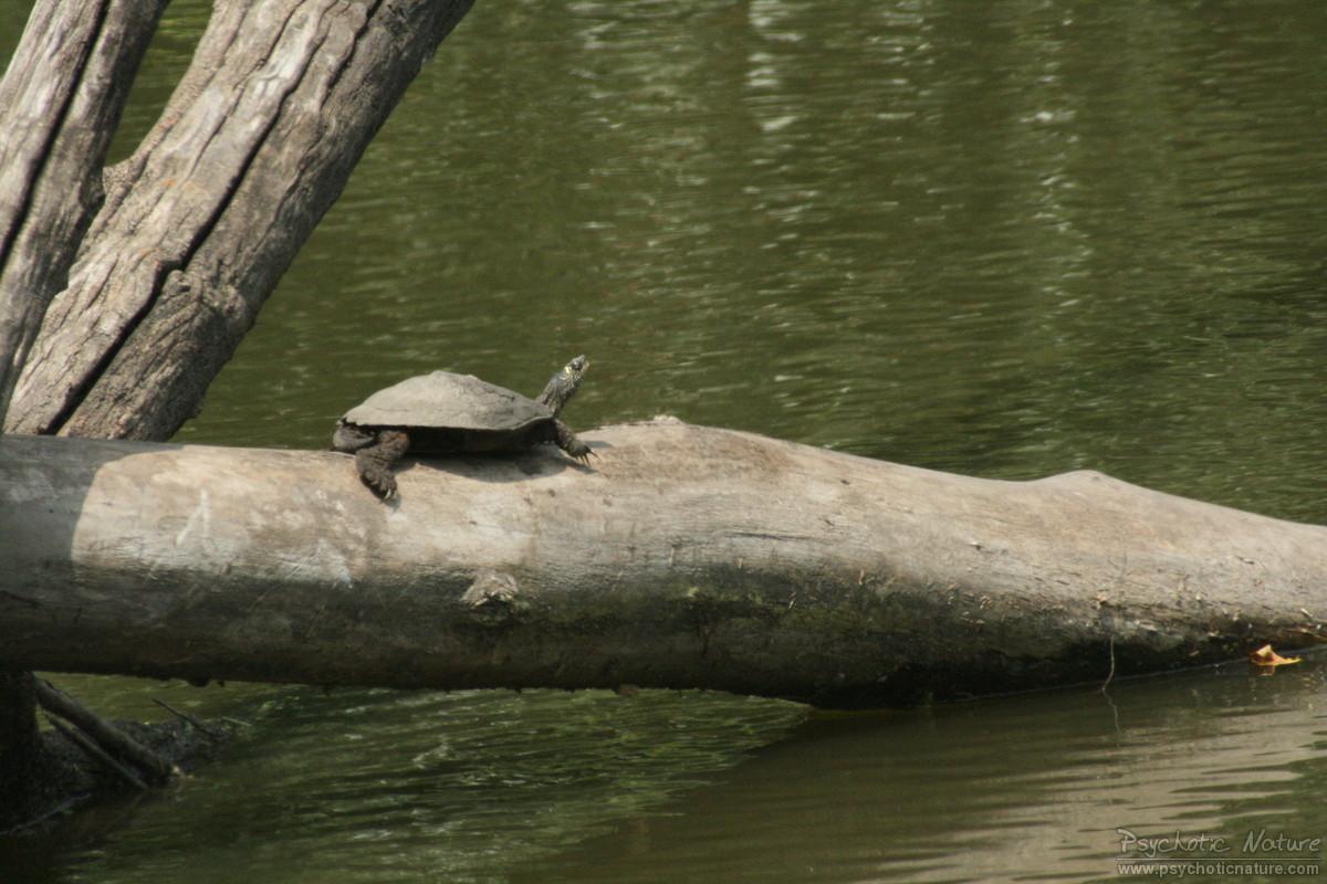 wallpaper funny turtle rain - photo #6